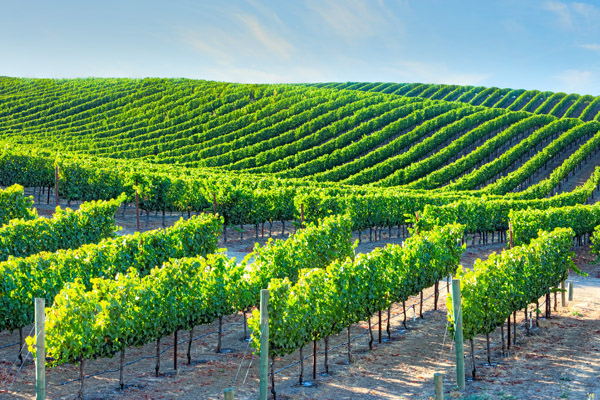 Taylor & Shroff - Fine Wines & Spirits